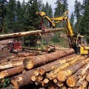 Заготовка древесины фото