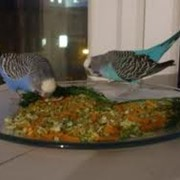Корм для птиц фото
