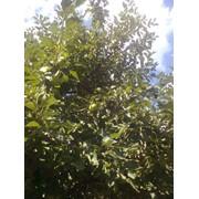 Обрезка веток деревьев Киевская область фото
