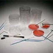 Бактериология фото