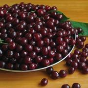 Саженцы вишни молодежные фото
