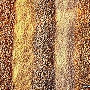 Комбикорм (гречка+кукуруза) фото