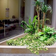 Фитодизайн (озеленение офисов и ресторанов) фото
