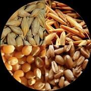 Фураж пшеница, ячмень, овес, просо фото