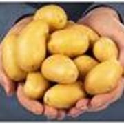 Продукты из картофеля фото