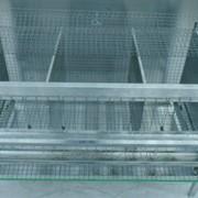 Клетка для кур на 9-12 голов 120 см трехсекционная фото