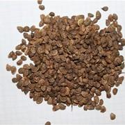 Семена эспарцета блыск фото