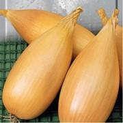Семена лука любчик фото