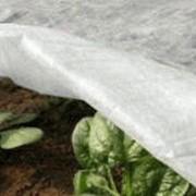 Агроволокно, спанбонд для сельского хозяйства. фото