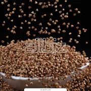 Семена гречихи сорт 9 фото