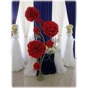 Большие цветы фото
