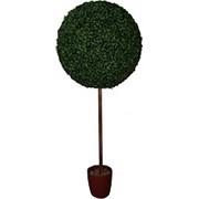 Искусственное дерево самшит шар на стволе d 30 см фото