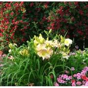 Устройство цветников,клумб,рабаток фото