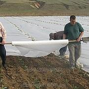 Агроволокно Premium-agro 50 г/м2 3,2х100м фото