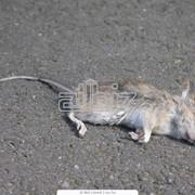 Уничтожение мышей, дератизация