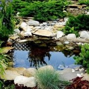 Создание и оформление водоёмов фото