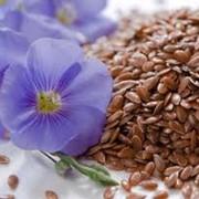 Семена масличные фото