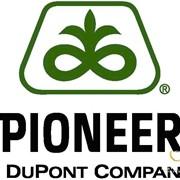 Семена подсолнечника Пионер ПР64Е71 фото