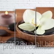 Модульна картина на полотні Біла орхідея код КМ100160-098 фото