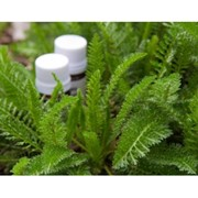 Соединения ароматические, эфирные масла фото