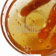 Мед гречишный оптом. Экспорт фото