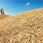 Культуры зерновые зерно зерновые продам в одесской области фото