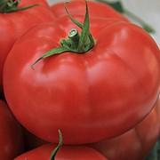 Семена томатов Джейн фото
