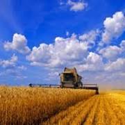 Экспорт сельскохозяйственной продукции фото
