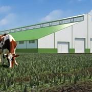 Архитектурное проектирование сельскохозяйств фото