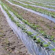 Средства защиты растений купить, Одесса. фото