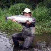 Разведение и выращивание пресноводной рыбы, рыбопосадочный материал фото