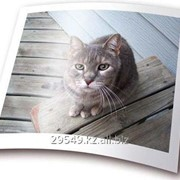 Фотобумага X-Gree 240 g/m2 50 list фото