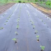 Агроволокно мульчирующее Premium-agro 50 г/м2 1,6х10м (черное) фото