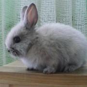 Декоративный кролик, купить Днепродзержинск фото