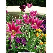 Цветники из многолетников фото