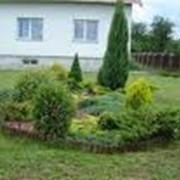 Озеленение сада фото