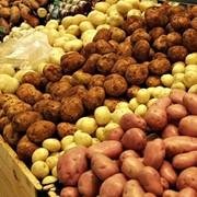 Свежий картофель фото