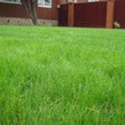 Озеленение садового участка фото