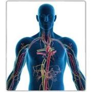 Эндокринная система фото