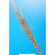 Выращивание зерновых фото