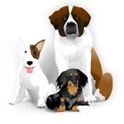 Зооняня, передержка собак фото