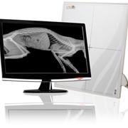 Рентгенография ветеринарная фото