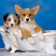 Шампуни для животных фото