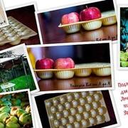 Подложка для овощей и фруктов с ячейками фото