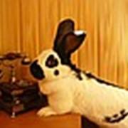 Кролик Немецкий пестрый великан фото