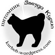 Котята Курильского бобтейла фото