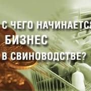 ТЭО инвестиционных проектов фото