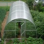 Теплица Фермер. 8х3х2 м. +Поликарбонат. Гарантия 10. фото