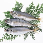 Разведение пресноводной рыбы, рыбопосадочный материал фото