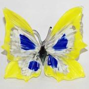 Бабочка красивая 6 фото